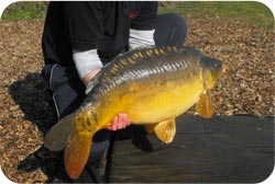 Day Ticket Carp Fishing Lakes in Essex and Syndicate Lakes